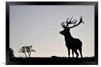 elk stag silhouette, Framed Print