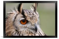 European Eagle Owl, Framed Print