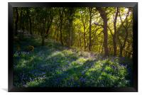 Sunbeams in a bluebell wood, Framed Print