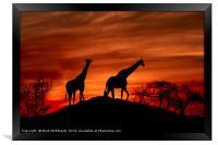 Giraffe Silhouette , Framed Print