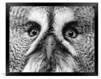 Great Gray Owl Black And White, Framed Print