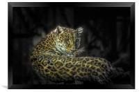 The Leopard, Framed Print