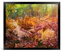 Autumn fern, Framed Print