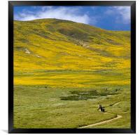 Spring landscape, California Poppy Reserve, Framed Print