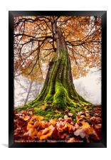 The Power of Roots, Framed Print