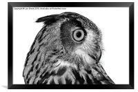 Eurasian Eagle Owl, Framed Print