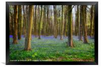 Bluebell Woods, Framed Print