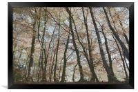 Painted Trees, Framed Print