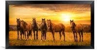 Horses at sunrise, Framed Print