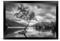The Lone Tree, Llyn Padarn, Llanberis, Framed Print