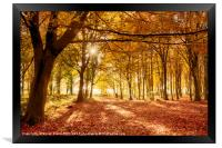 Amazing forest colours in autumn fall, Framed Print