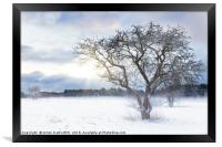 Bare tree in a snow field with sunrise, Framed Print