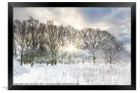 Snow covered rural trees with early morning sunris, Framed Print