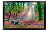 woodland sunrays, Framed Print