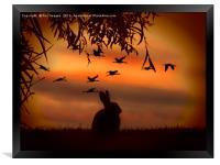 Sunset rabbit, Framed Print