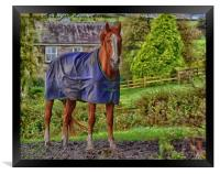 Horse in the Countryside, Framed Print