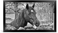 Horse Portrait, Framed Print