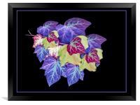 Ivy, Framed Print