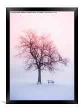 Winter tree in fog at sunrise, Framed Print
