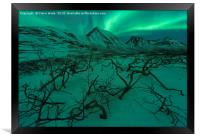 Northern Lights over Snow and Dead Trees, Framed Print