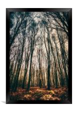 A Woodland Dawn, Framed Print