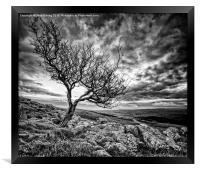 Lone, Framed Print