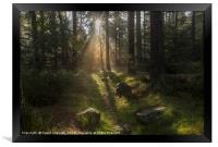 Forest Sunshine   , Framed Print
