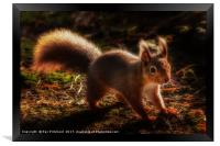 Red Squirrel or Squizz , Framed Print
