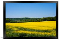 Rapeseed field,West Sussex, England , Framed Print
