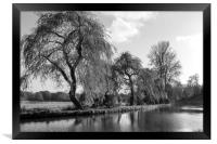 The River Wey,Guildford, Surrey,England , Framed Print
