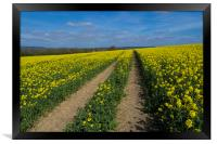 Rapeseed fields ,Sussex, Framed Print