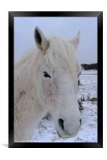 New Forest Pony, Framed Print