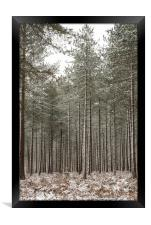 Winter In the New Forest, Framed Print