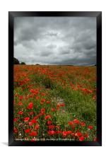 Poppies before the Storm, Framed Print