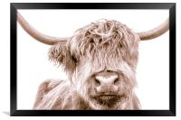 Hairy Coo Collection 1 of 7, Framed Print