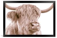Hairy Coo Collection 4 of 7, Framed Print