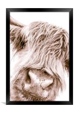 Hairy Coo Collection 6 of 7, Framed Print