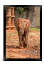 Baby  ช้างไทย, chang , Framed Print