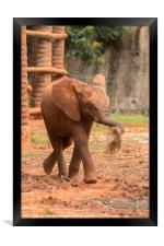 Baby  ช้างไทย, chang #2, Framed Print