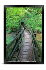 Secret Pathway, Framed Print