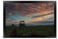 Tractor Parked On The Potato Fields, Framed Print
