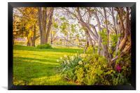 Peaceful Pastures, Framed Print