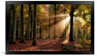 Autumn Forest, Framed Print