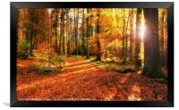Autumn Forest, Framed Print