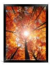 Golden Forest, Framed Print