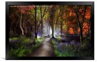 Bluebell Woods, Framed Print