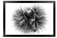 The sweet chestnut (Castanea sativa), Framed Print