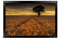 Harvest Time, Framed Print