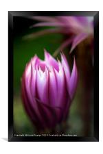 Budding Cactus, Framed Print