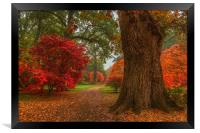Acer's in Autumn, Framed Print